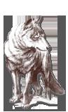 wolfenhof wolf